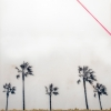 palms-1-of-12-36x36-photo-image-transfer-on-panel-1600-00
