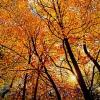 algonquin_sundance-38x57