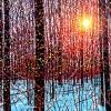 december-sunshine-30x40